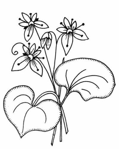 riscos para bordado livre floral