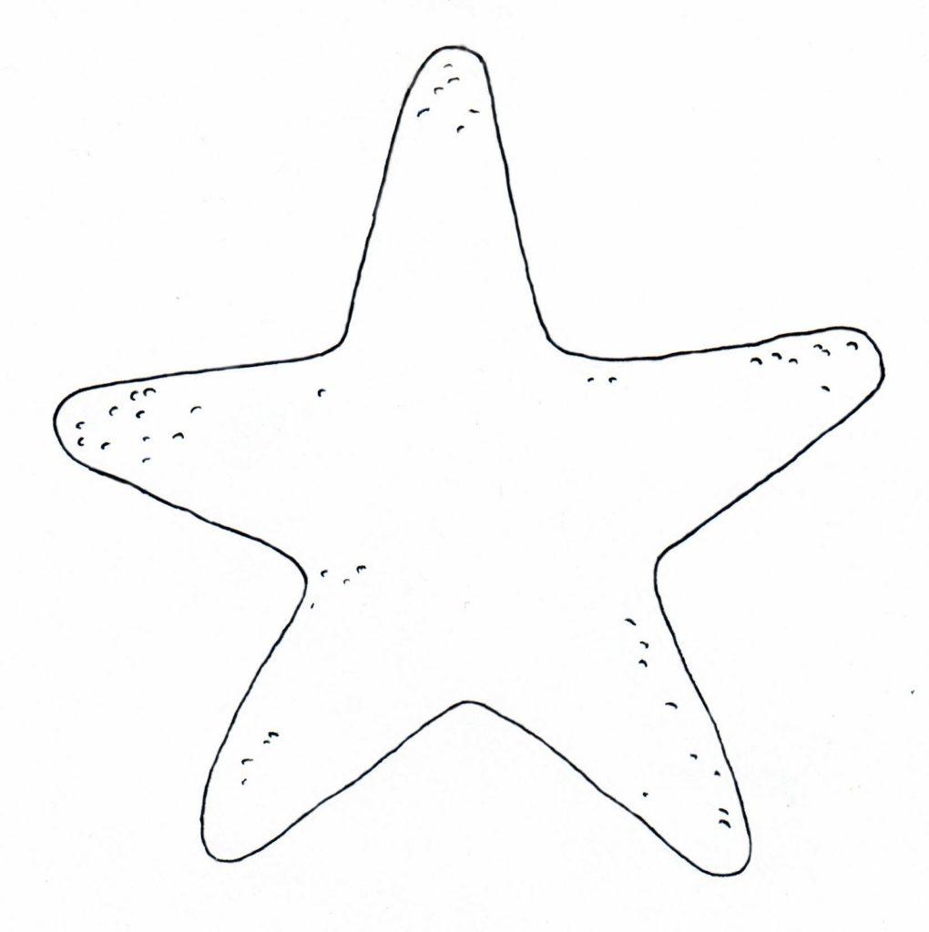desenho de estrela do mar