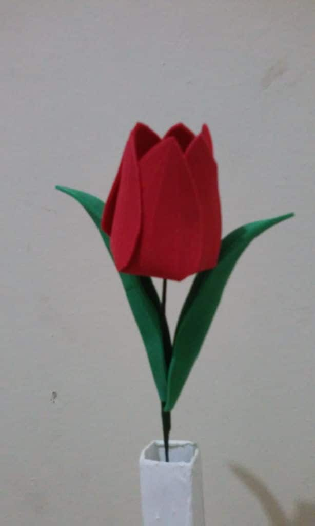tulipa eva