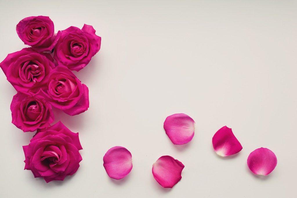 como conservar petalas de rosas por mais tempo