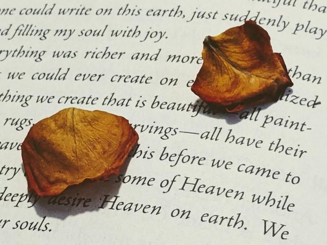 como secar petalas no meio do livro